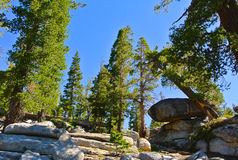 Parc national de Yosemite Photos stock