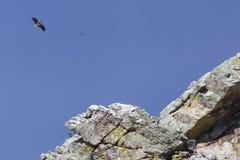 Parc national du ¼ e de Monfragà Image libre de droits
