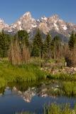 Parc national grand de Teton de l'eau de castor de montagnes lisses de barrage Images libres de droits