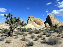 Parc national la Californie - Etats-Unis d'arbre de Joshua images libres de droits