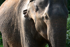 Parc national Uda Walawe Photo stock