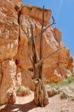 Parc national Utah de canyon de Bryce Photographie stock libre de droits