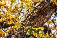 Parc naturel de Martin en automne Images libres de droits