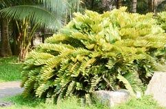 Parc naturel frais avec des palmiers images libres de droits