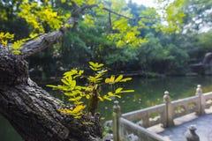 Parc ocre de montagne de Wuhu photos libres de droits