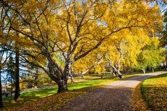 Parc paisible avec des couleurs d'automne dans les arbres Image libre de droits