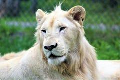 Parc parka safari, Hemmingford, Montreal Zdjęcie Stock