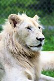Parc parka safari, Hemmingford, Montreal Obraz Royalty Free