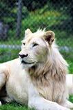 Parc parka safari, Hemmingford, Montreal Zdjęcia Royalty Free