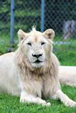 Parc parka safari, Hemmingford, Montreal Obrazy Royalty Free
