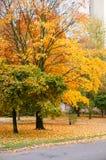 Parc pendant l'automne image stock