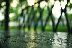 Parc pluvieux d'été photographie stock libre de droits