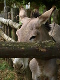 Parc Poppi Italy de zoo : âne Images stock