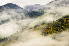 Parc provincial de lac Chilliwack en brouillard Image stock
