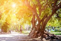 Parc public à Santiago, Chili Images libres de droits