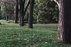Parc public avec le champ d'herbe verte Photos stock