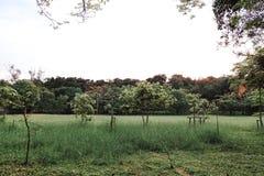 Parc public avec le champ d'herbe verte Photo libre de droits