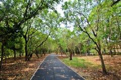 Parc public de Bangkajao, Thaïlande Image stock