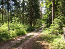 Parc régional de kÄ-s de ¡ de DieveniÅ (Lithuanie) Photo stock