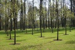 Parc régulier au printemps Photos stock