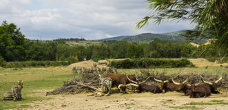 Parc Reserve Africaine de Sigean de safari Image stock