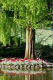 Parc SigurtÃ,Vérone, Vénétie de tulipe Photos libres de droits