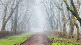 Parc sombre avec les arbres nus en brouillard image libre de droits