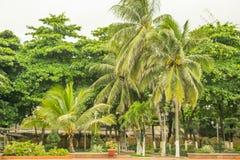 Parc tropical avec les paumes, la pelouse et les chemins Photos stock