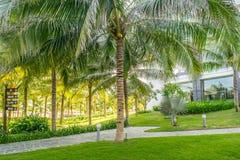 Parc tropical avec les paumes, la pelouse et les chemins Images stock