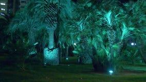 Parc tropical de nuit avec des palmiers dans la station touristique avec l'?clairage de nuit 4K banque de vidéos