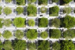Parc urbain Arbres et trottoir dans des places d'échecs Photographie stock libre de droits