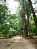 Parc vert Photo libre de droits