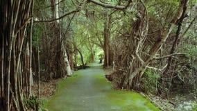 Parc vert Image libre de droits