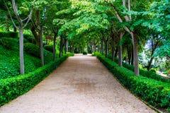 Parc vert Image stock