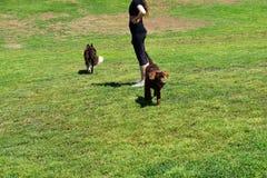 Parc vert luxuriant de chien avec le chien heureux énergique photos stock
