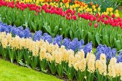 Parc vibrant de fleur de ressort de parterre images libres de droits