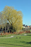 Parc with weeping willow and ducks in early spring Royalty Free Stock Photography