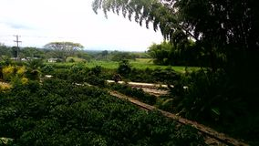 Parc &#x28 de café ; colombia&#x29 ; Image libre de droits