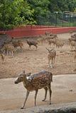 Parc zoologique de Nandankanan Images libres de droits