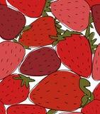 Parcela de morangos, esboço para seu projeto ilustração stock