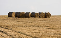Parcels on the field. Right after the harvest Royalty Free Stock Photography