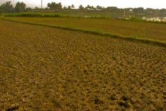 parched земля Стоковая Фотография RF