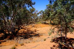 Parched Desert Bushland- Desert Colors Royalty Free Stock Photo
