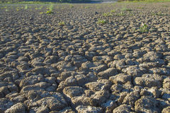 Parched Earth Stock Photos