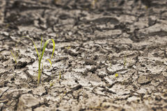 Parched earth with small plant Stock Image