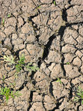 Parched earth in summer Royalty Free Stock Images