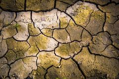 Parched Earth Yearning for Water Stock Images