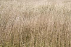 Dried-out grass, background with dried out grass, climate changing, global worming royalty free stock photos