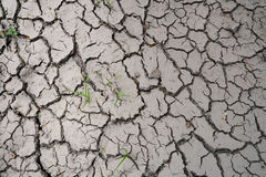 Parched ground Stock Images