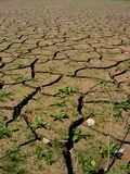 parched jord Arkivbilder